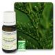 Thuya Occidentalis aceite escencial Pranarom (10 ml)