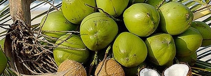 Hidrata y nutre la piel y el cabello con Aceite de Coco