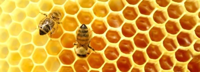 ingredientes para cera de abejas