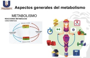 Metabolismo Endofarma