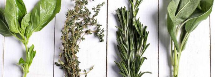 6 consejos usos plantas